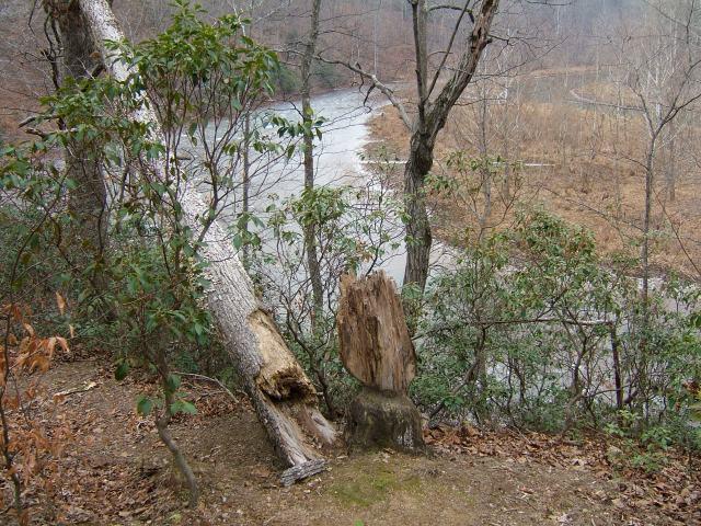 Looking down on Ivy Creek, where I often watch deer browsing.