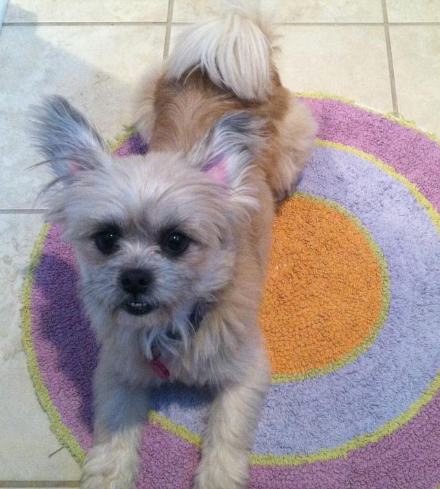 Brody, Ear-do #2.
