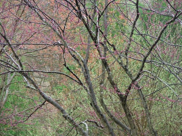 spriing-colors-in-trees